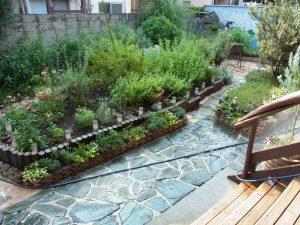 日暮里カルチャースクールの庭です。多くの植物があります。