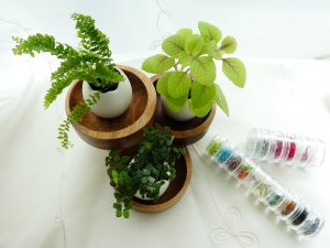 植物を見て癒されながらビーズ刺繍をしています。