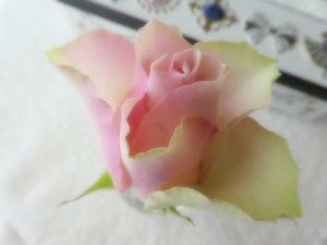 綺麗な薔薇が一輪あります。