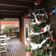 クリスマスツリーに迎えられて
