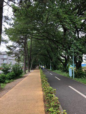 住まい近くの緑道です。