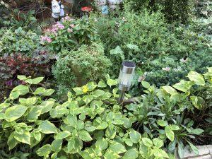 日暮里カルチャーの庭です。