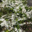 散歩中の小さな白い花に癒されます。