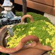 春の黄色いお花に癒されます