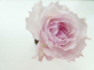 アトリエに薔薇の花を飾って、レッスンに励みます。