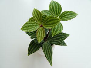 小さな観葉植物に癒されます。