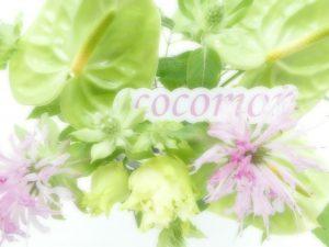 癒されるお花アンスリュームです。