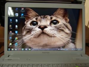myパソコンのトップページ猫の顔です。