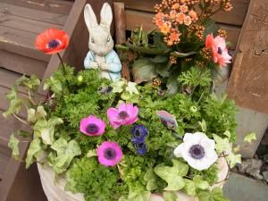 ウサギとお花の寄せ植えが、入リ口でお出迎えです。