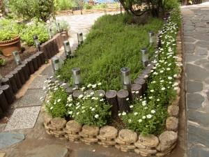 シャレイのお庭には、綺麗な白いお花が咲いています。
