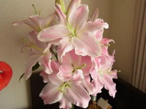 オリエンタルリリィが12個咲いています。