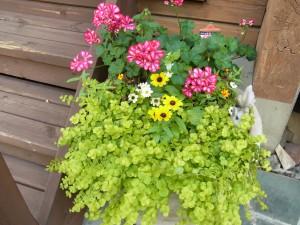 綺麗なお花の寄せ植えが、お出迎えです。
