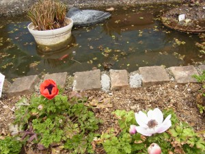 庭のいけにカエルが泳いでいます。