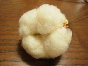 コットンは綿の膨らみでワイヤーが目立ちません。