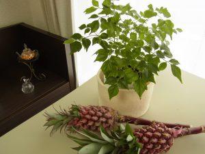 本体は観葉植物を入れるケースに利用します。