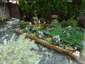 カルチャースクールの庭です。緑がいっぱいです。